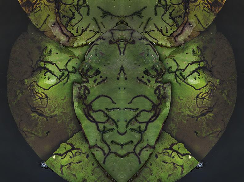 Lily Pads - Image Mirroring