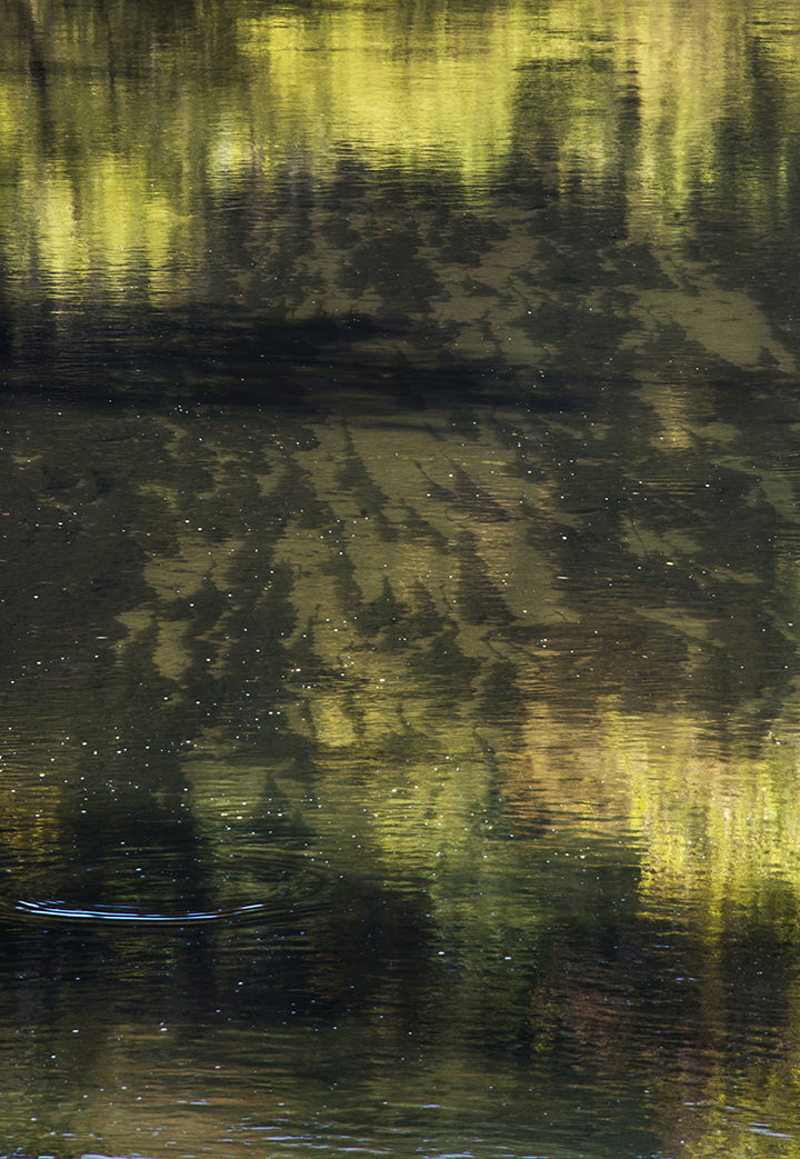 Root River Reflections