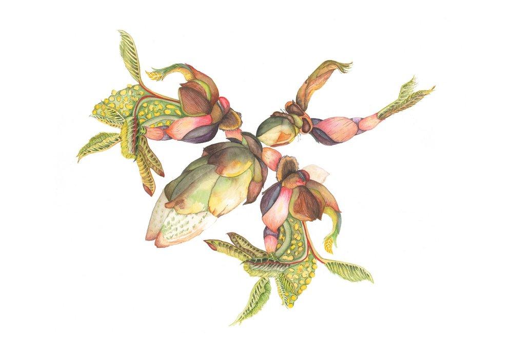 Horse Chesnut Bug, 2013