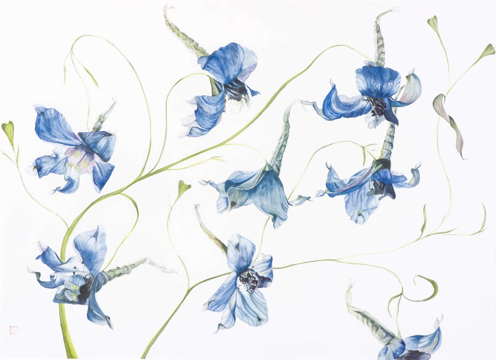 GONE WITH THE WIND – DELPHINIUMS, 2017