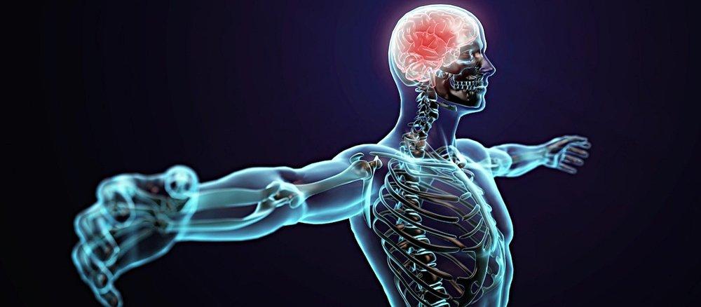 nervous-system_2.jpg