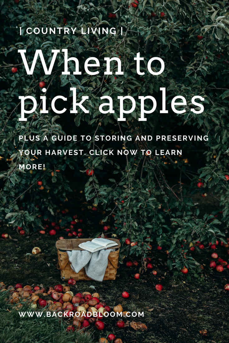 How to pick, store, and preserve apples (1).png