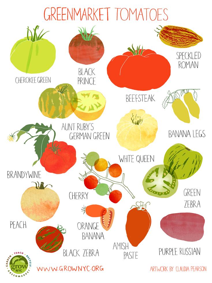 Claudia Pearson - Tomatoes