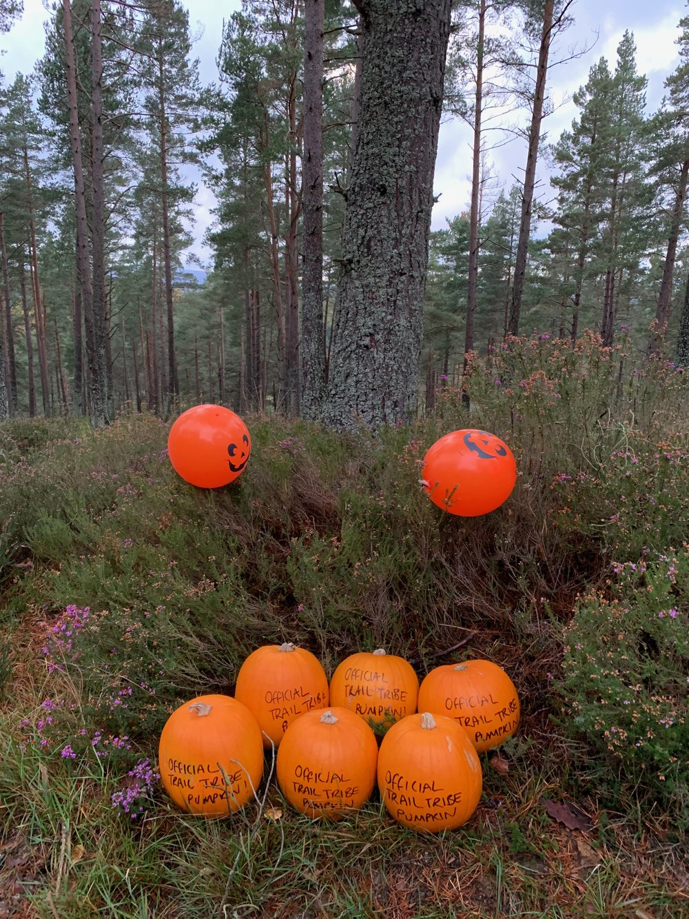 Official Trail Tribe Pumpkins! Also double as medicine balls!