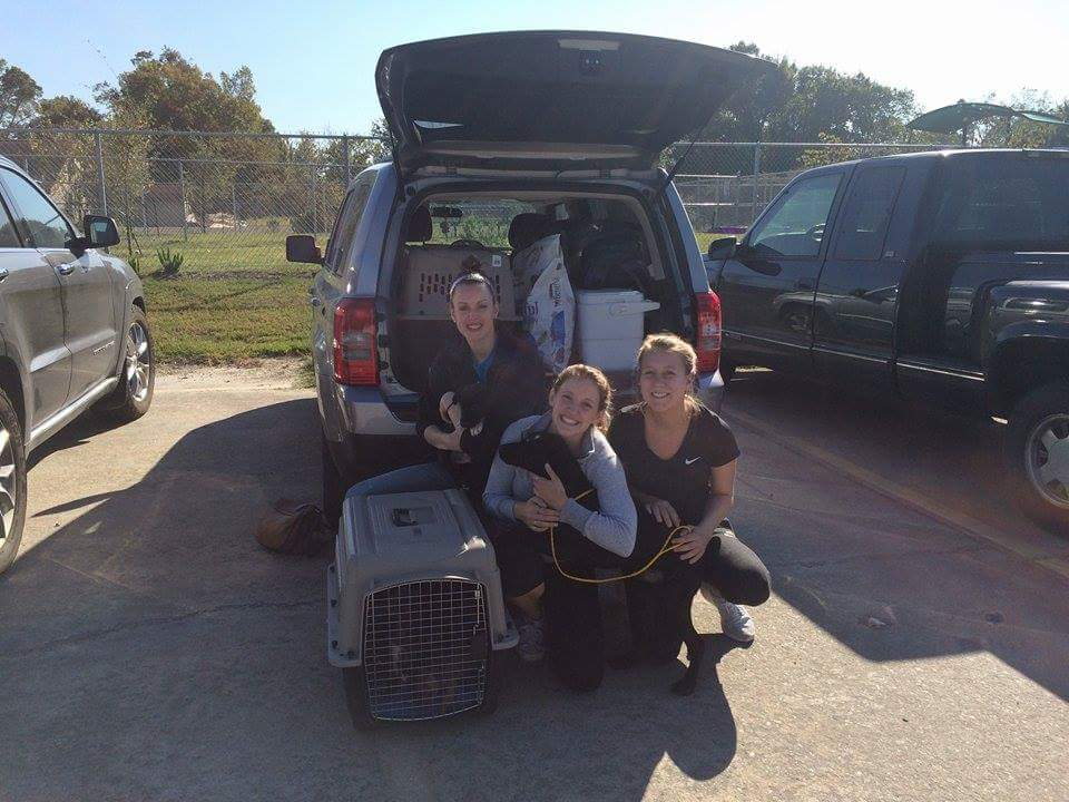 Left to right: Sam Parker, Maddy Vasseau, and Elizabeth Elliott. Teary eyed after rescuing 9 dogs from Harris County Animal Shelter in Houston, Texas on October 19th, 2015.