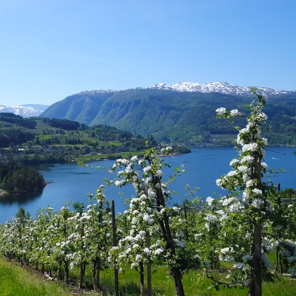 Brakanes Hotel - Video for the Hardanger base hotel ‹‹Brakanes Hotel›› showing the beautiful nature in Hardanger,Made in 2018