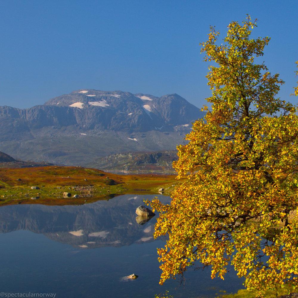 Autumn in Norway - Autumn at Haukeliseter. 1,2 million views