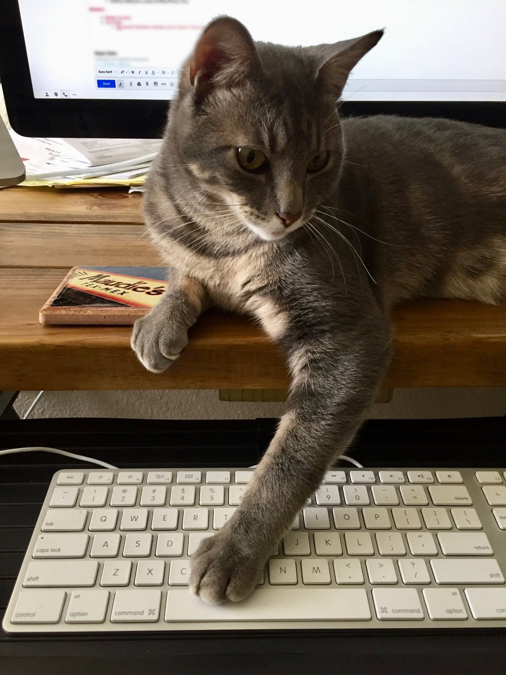 Pets like Bo Baker make the best and worst office mates when you work from home.