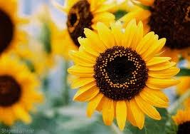 Hello Summer - Shop the seasons best blooms!