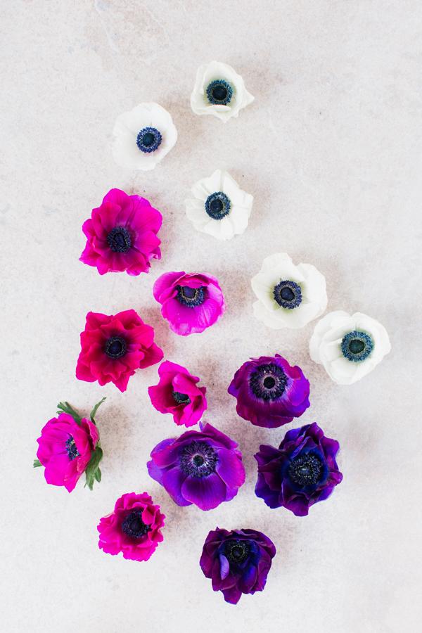 anemones-1.jpg
