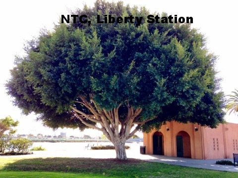 Liberty Station 2.jpg