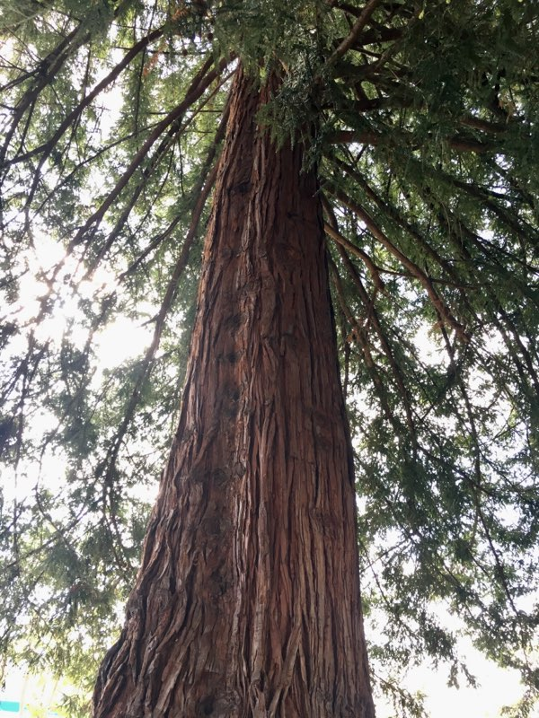 Monterey Landscape (4).jpg