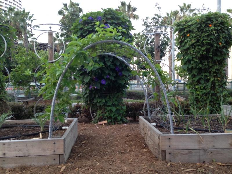 NCM - Garden (4).jpg