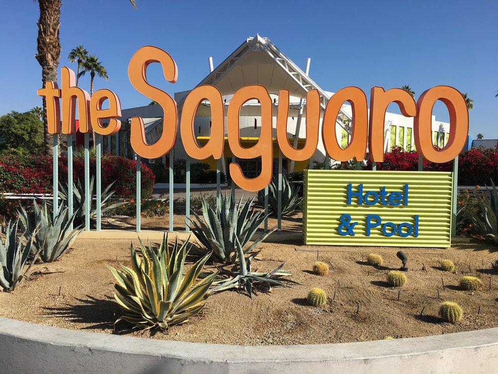 Saguaro by day (2).JPG
