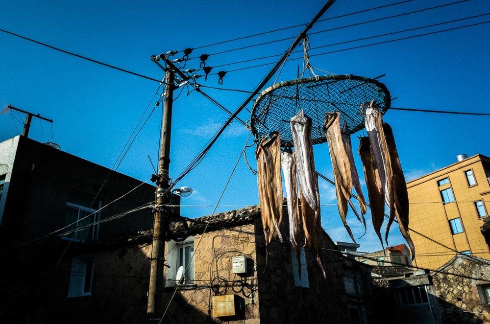 fishhang-544.jpg