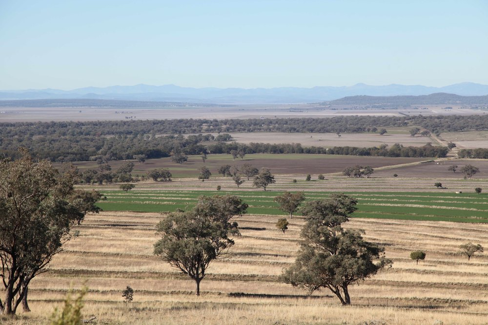 """We can grow anything here, you only have to look at the black soil and the climate,"" Rosemary Nankivell, Liverpool Plains farmer."