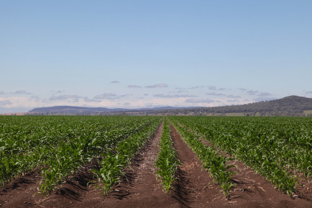 Breeza farm land close to the site Shenhua wants to put an open-cut coal mine.