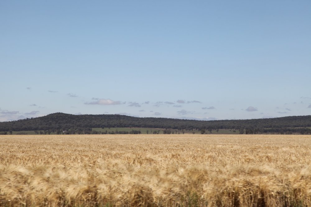 The Liverpool Plains.