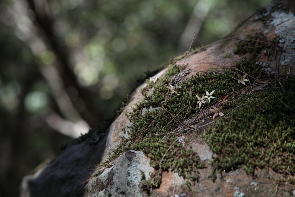 berowra-valley-moss.jpg