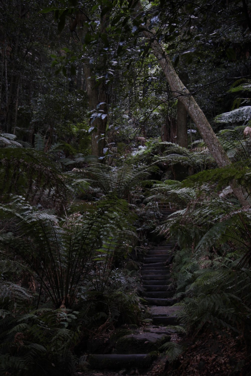 Leura in the Blue Mountains National Park.