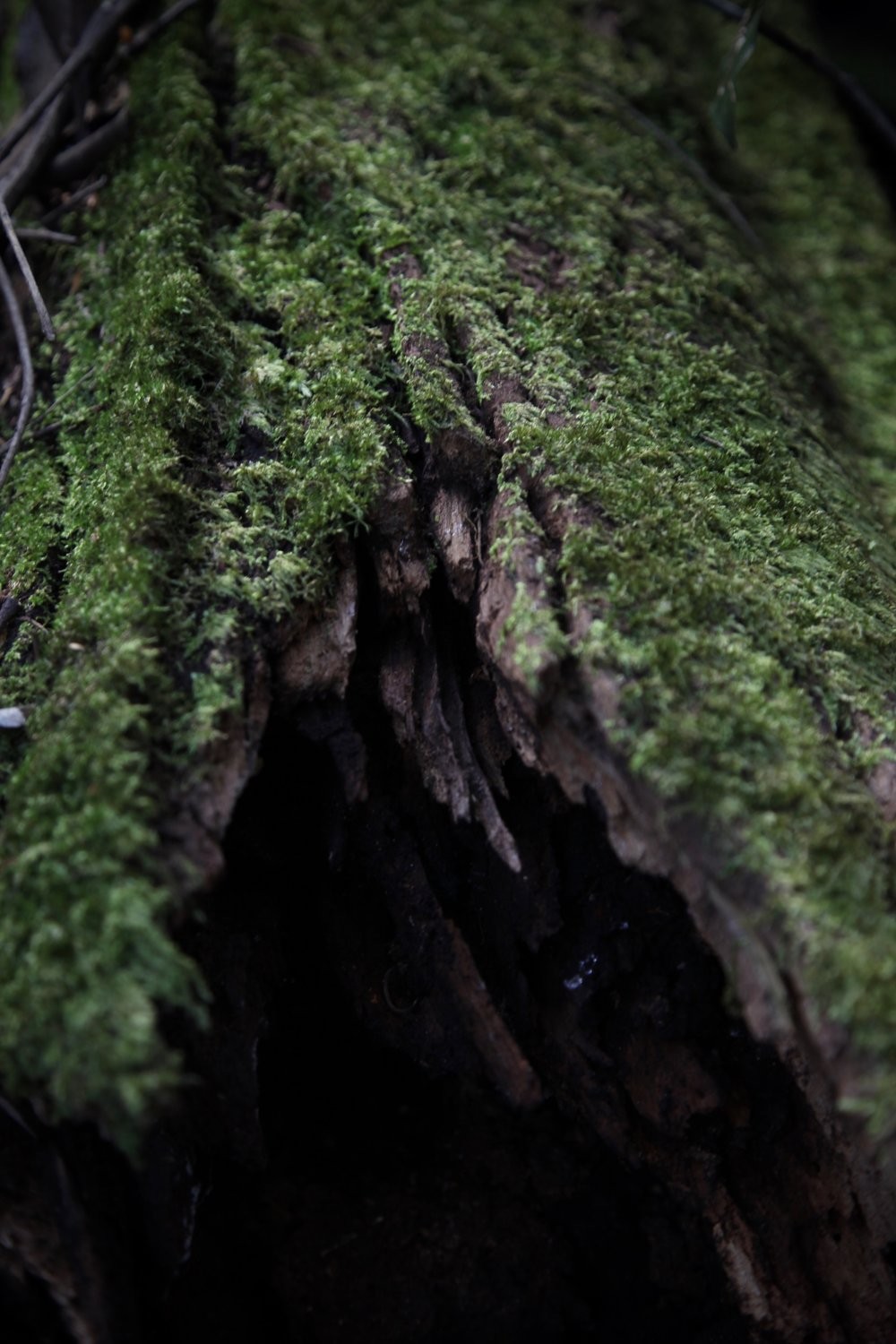 moss-log-leura-forest.jpg