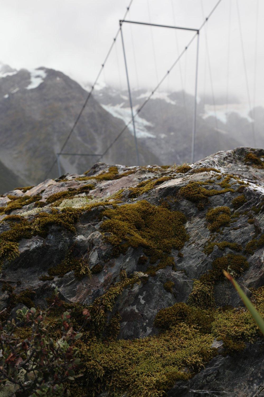 hooker-valley-bridge-moss.jpg