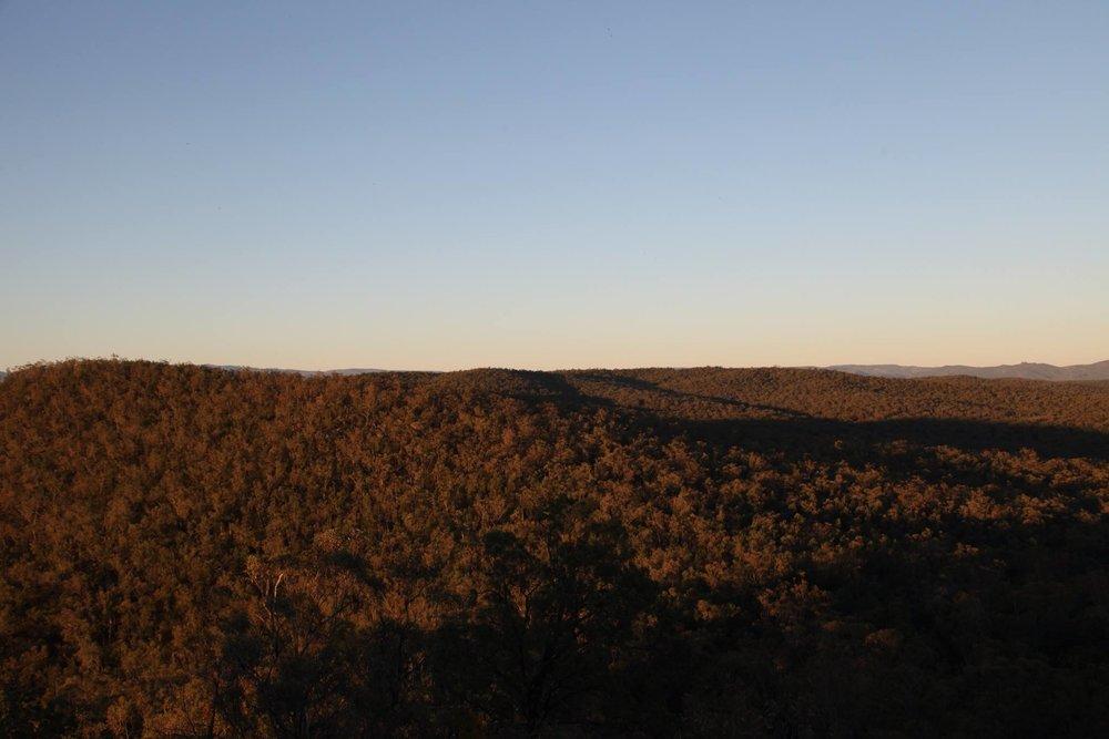 leard-forest-golden-hour.jpg