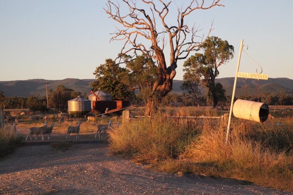 maules-creek-farm.jpg