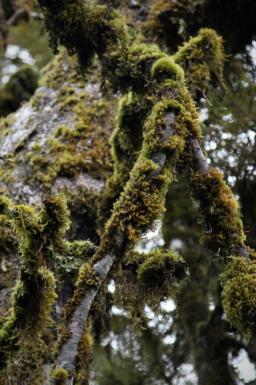 moss-key-summit-fiordland.jpg