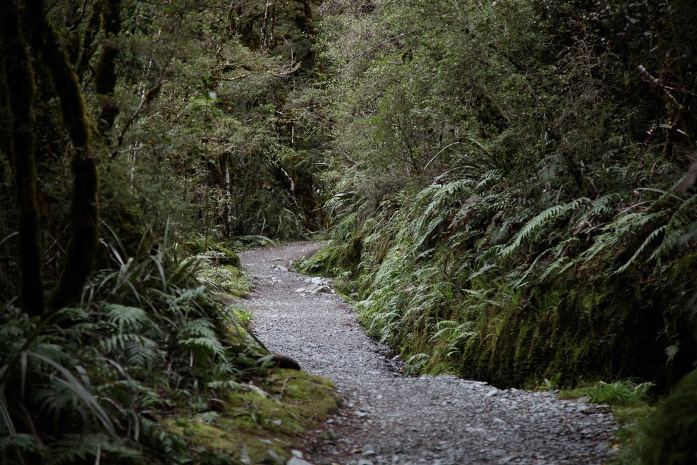 Access to the Key Summit track is from The Divide carpark, about 85km from Te Anau.