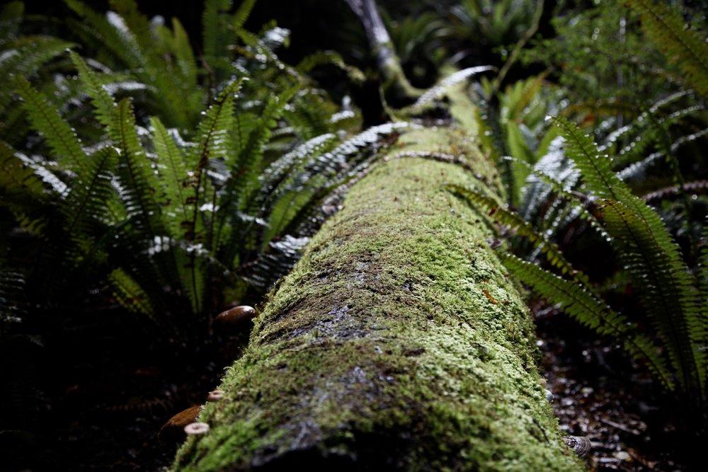 mossy-log-kepler-track.jpg
