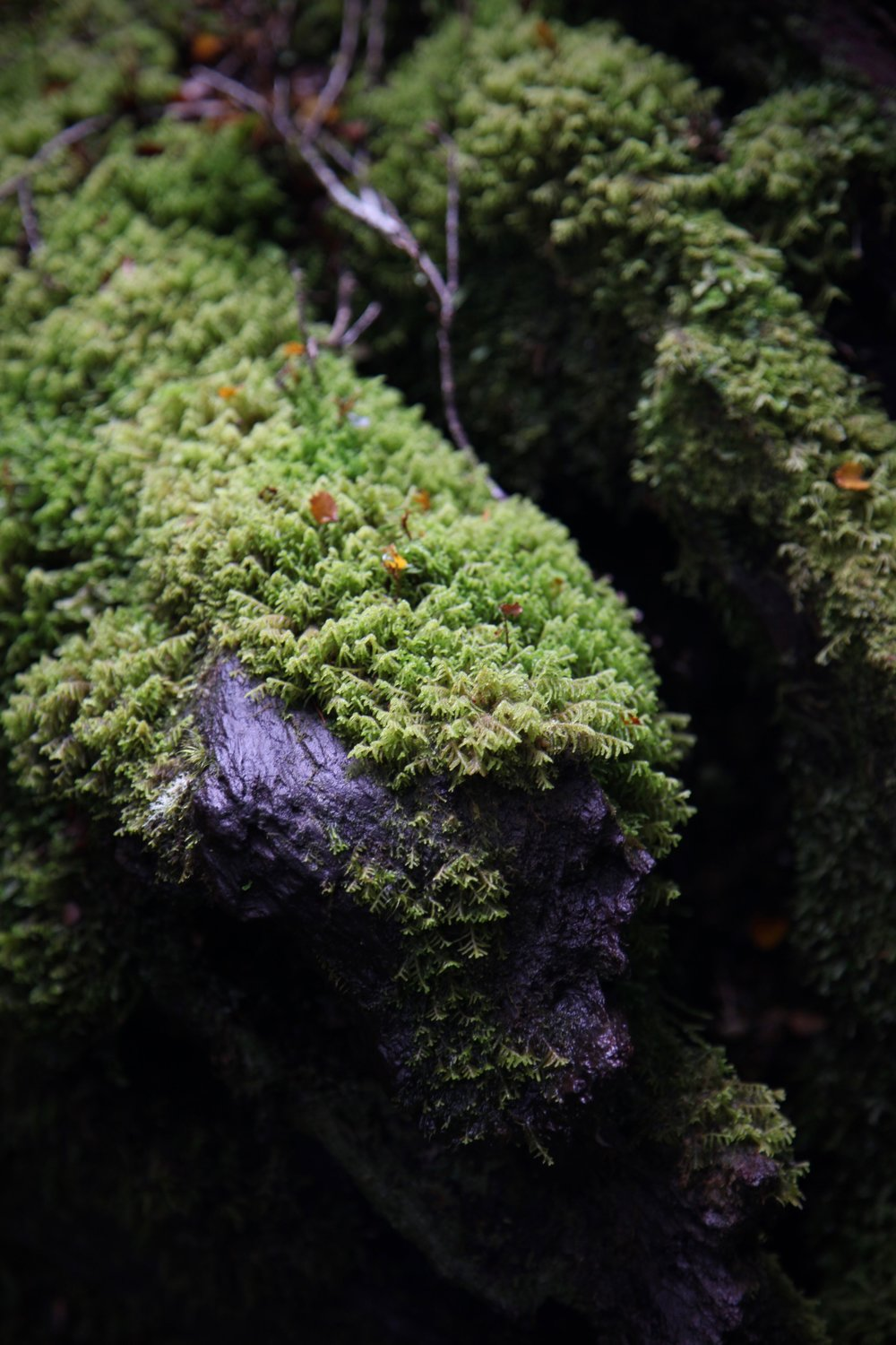 moss-log-key-summit.jpg