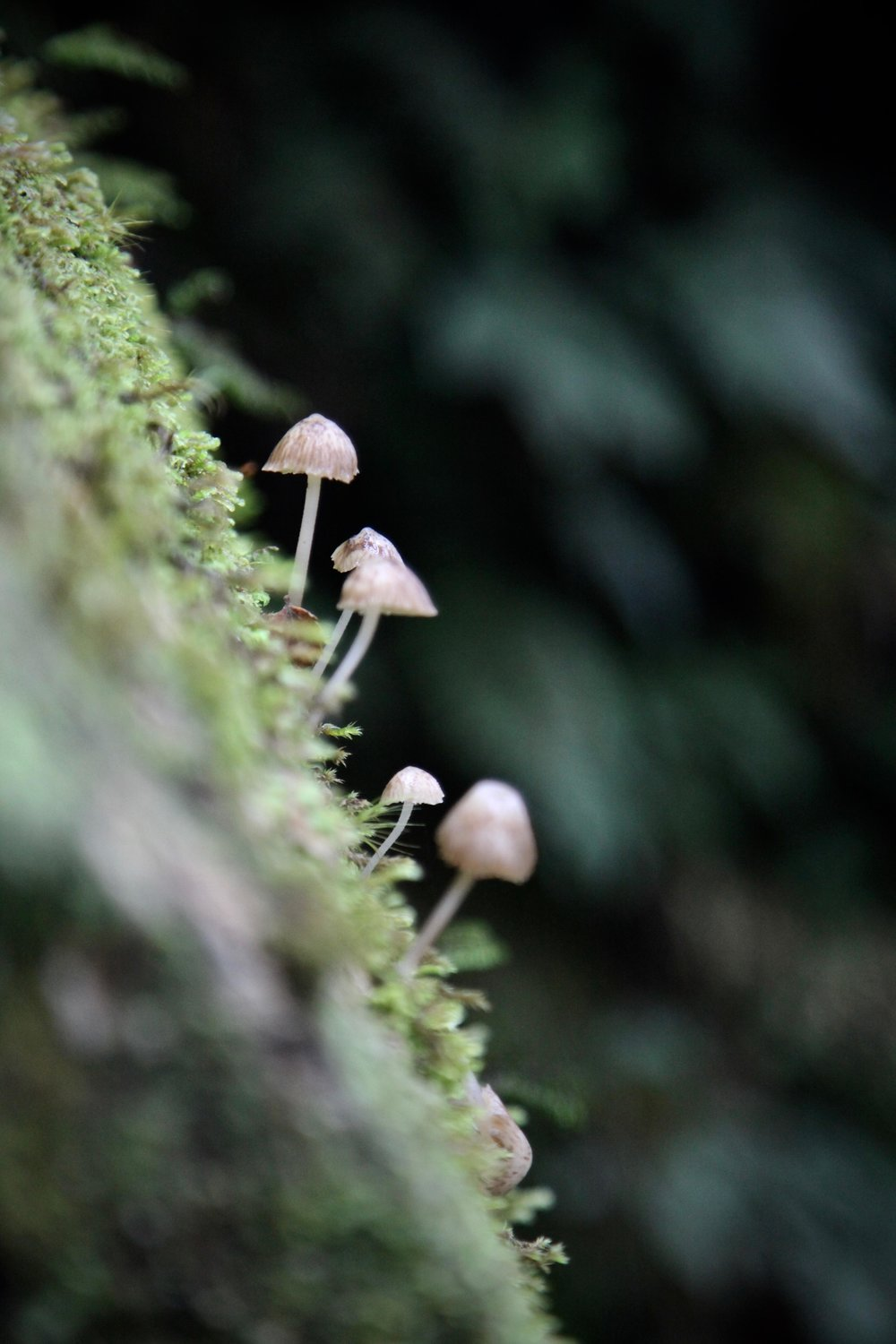 tiny-fungi-key-summit-fiordland.jpg