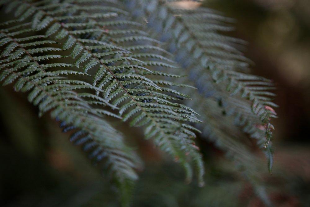 dandenong-ranges-np-fern.jpg