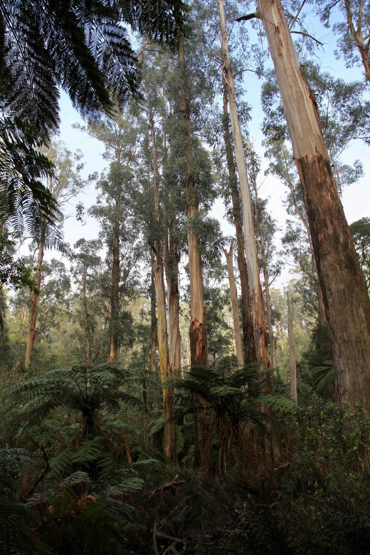Dandenong Ranges National Park.