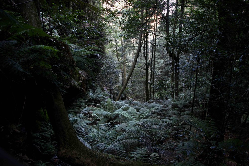 Dardanelles Pass is a Blue Mountains walking track that will take you from Katoomba to Leura.
