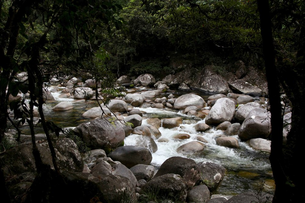 daintree-river-mossman-gorge.jpg