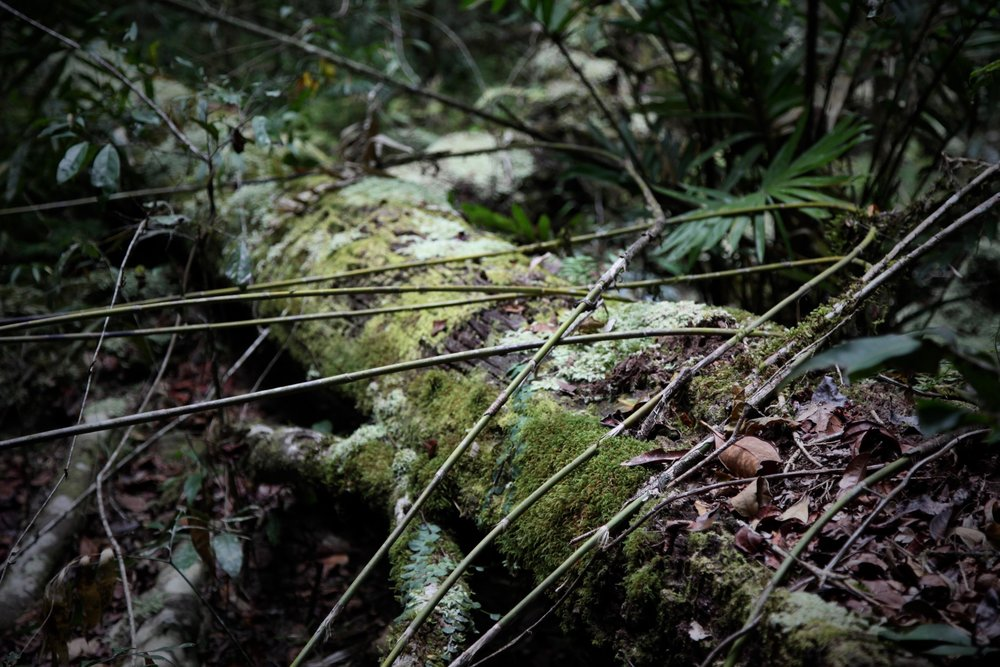 daintree-mossy-fallen-tree.jpg