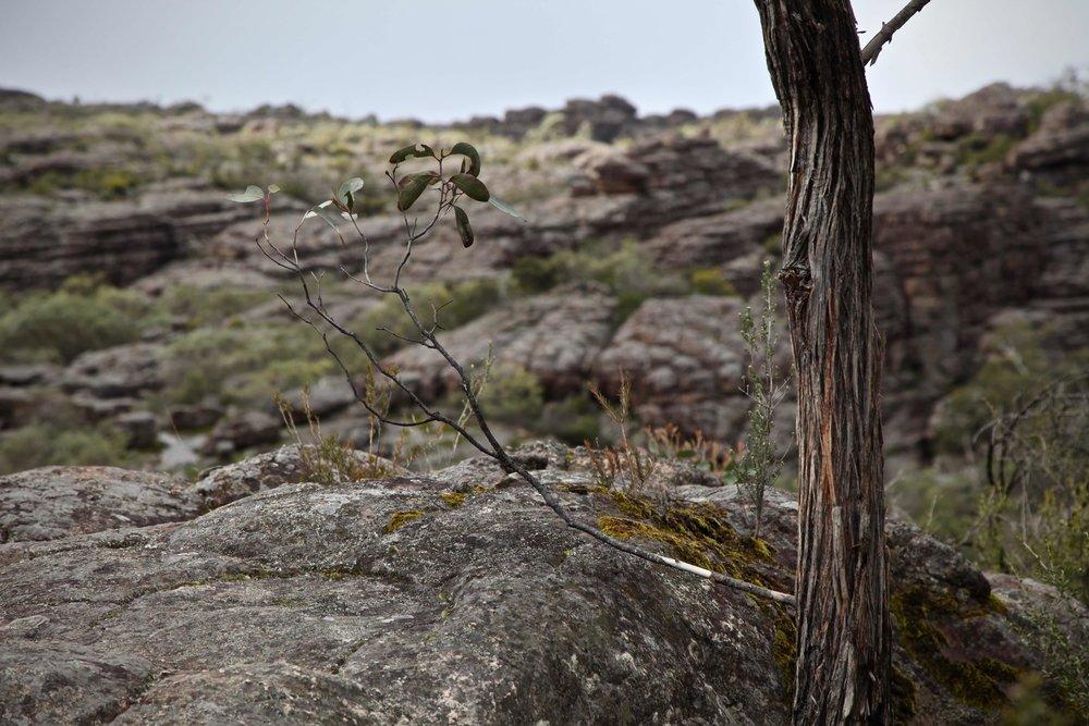 grampians-hiking-track.jpg