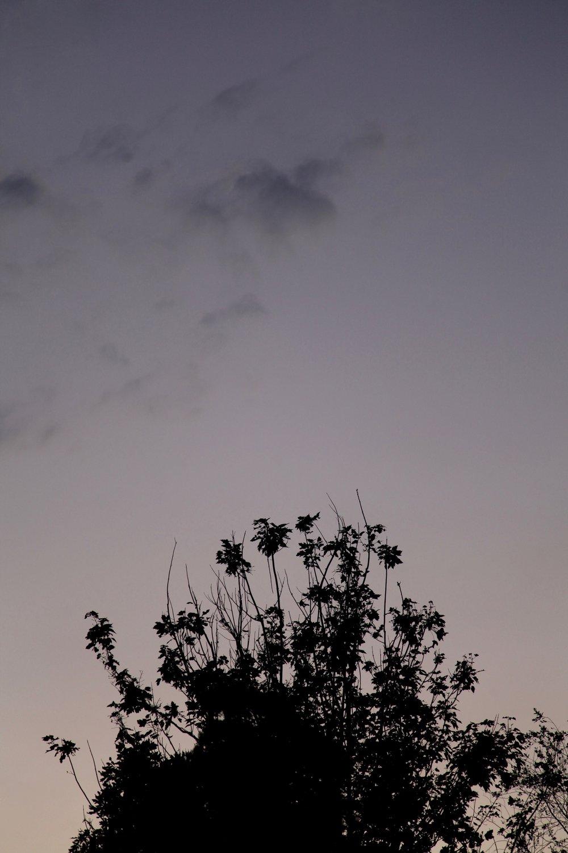 Suburban backyard sunset — Jewells.