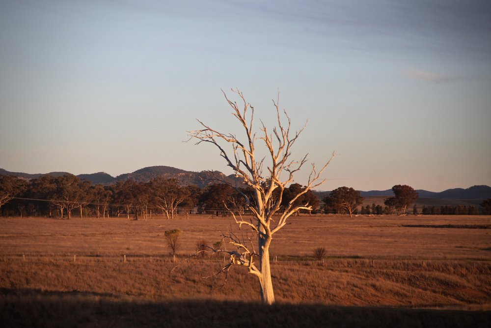 Hunter Valley at sunset, from the window of the heritage train running between Maitland and Muswellbrook. August 2016.
