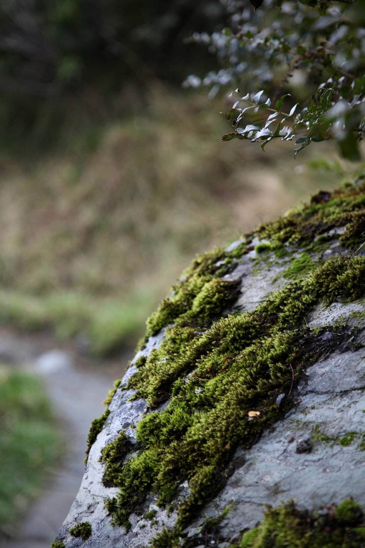 rob-roy-rock-moss.jpg