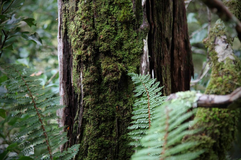 mt-aspiring-np-moss-tree.jpg