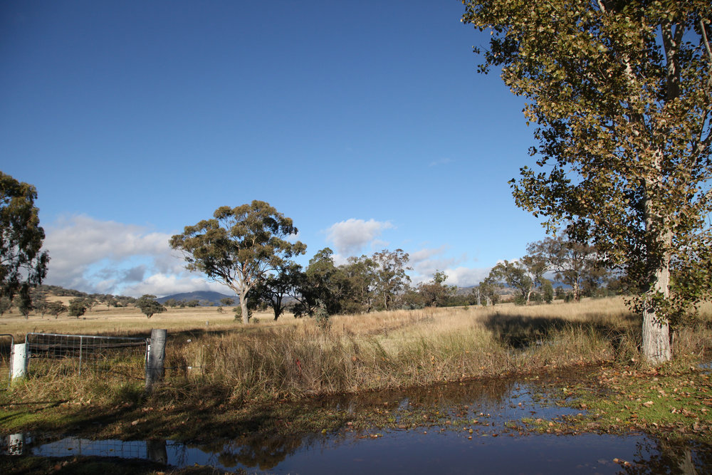Agricultural land near Willow Tree in north west NSW.