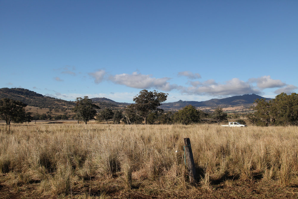 Farm land near Willow Tree in north west NSW.