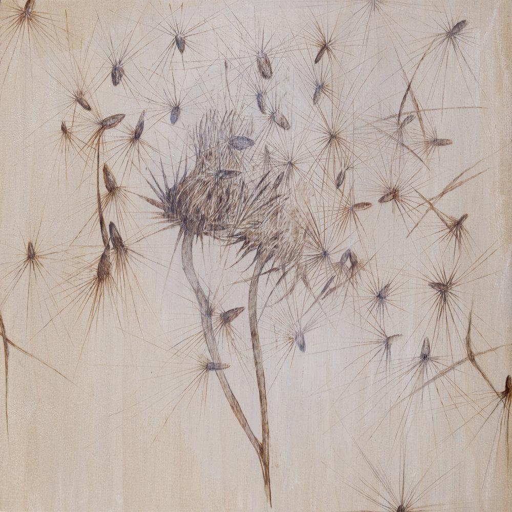 06. Desert Thistle Seeds.jpg