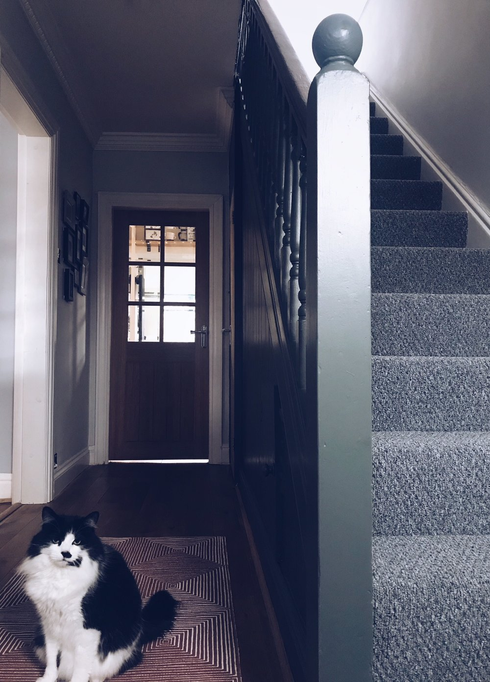 Beautiful cat and hallway combination!