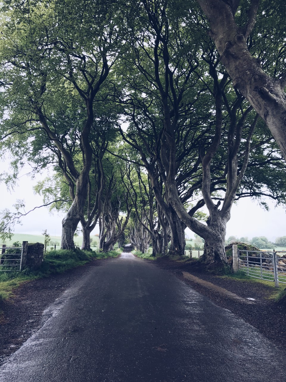 The Dark Hedges, Northern Ireland. Games of Thrones tourist destination - I have edited out all the people!