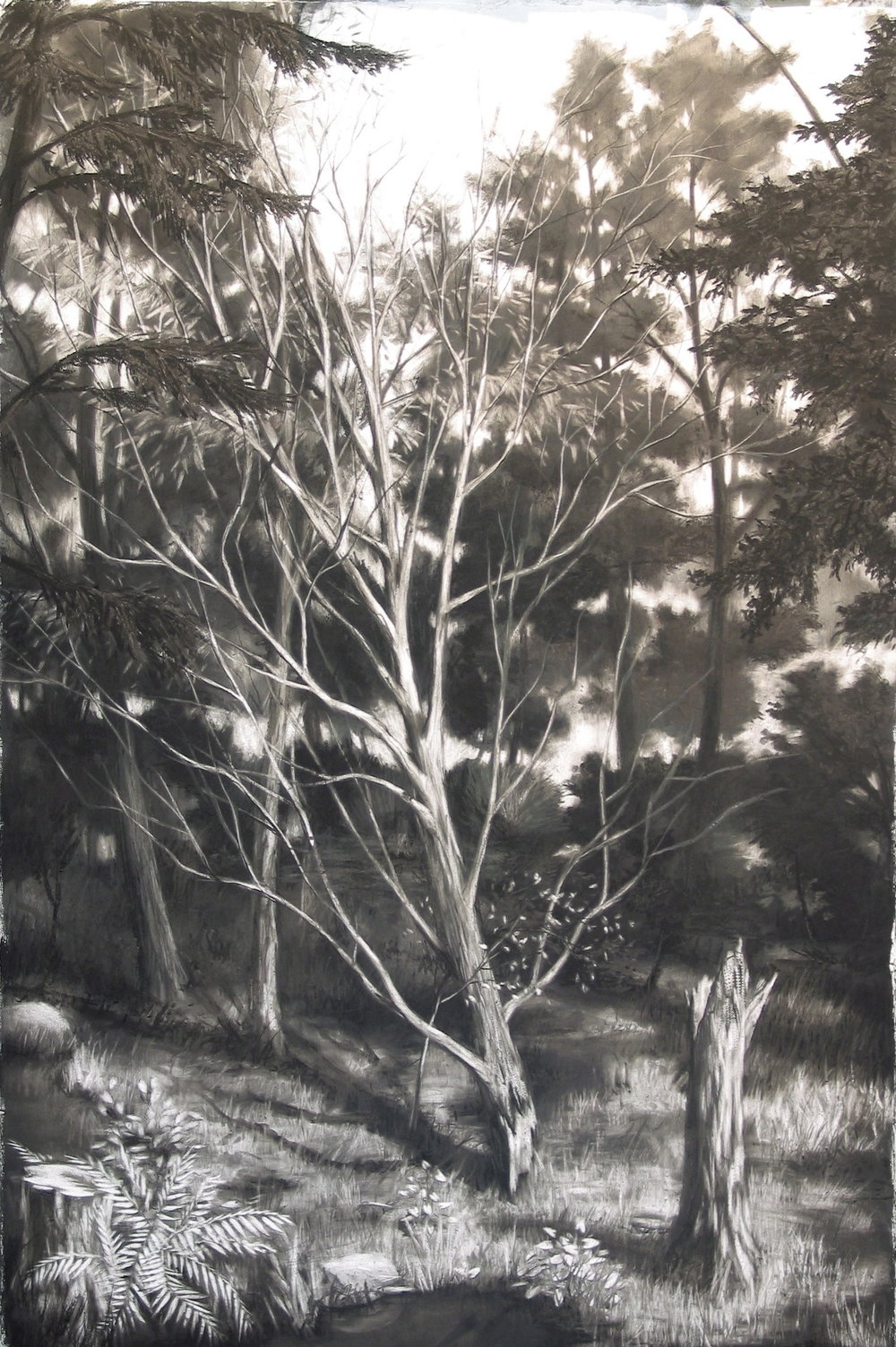 Fallen Tree  , 2005  charcoal  66 x 42 in.