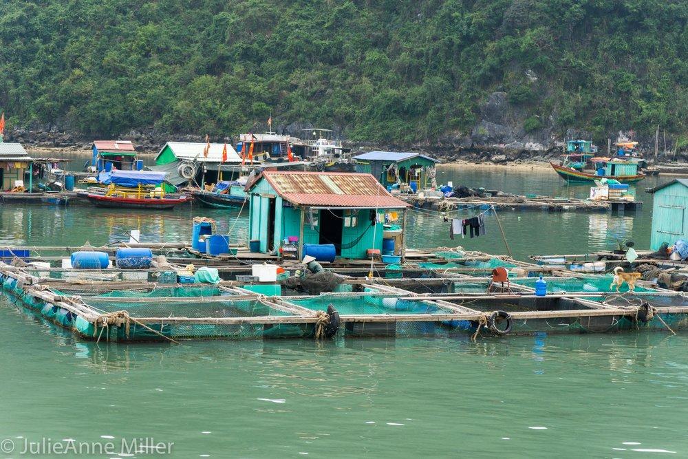 Seafood Farm in Cat Ba Bay